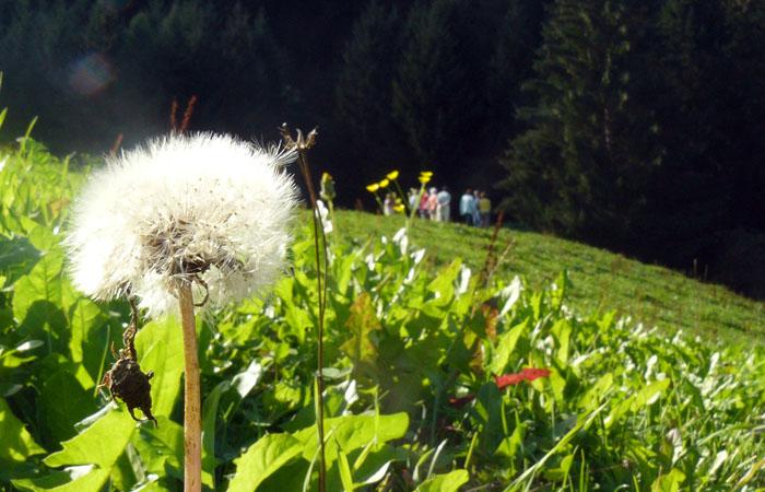 Kräuterwanderung_Gartenbau_Fulpmes_2011_2