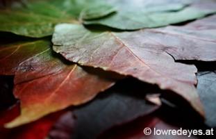 Blätterlampe