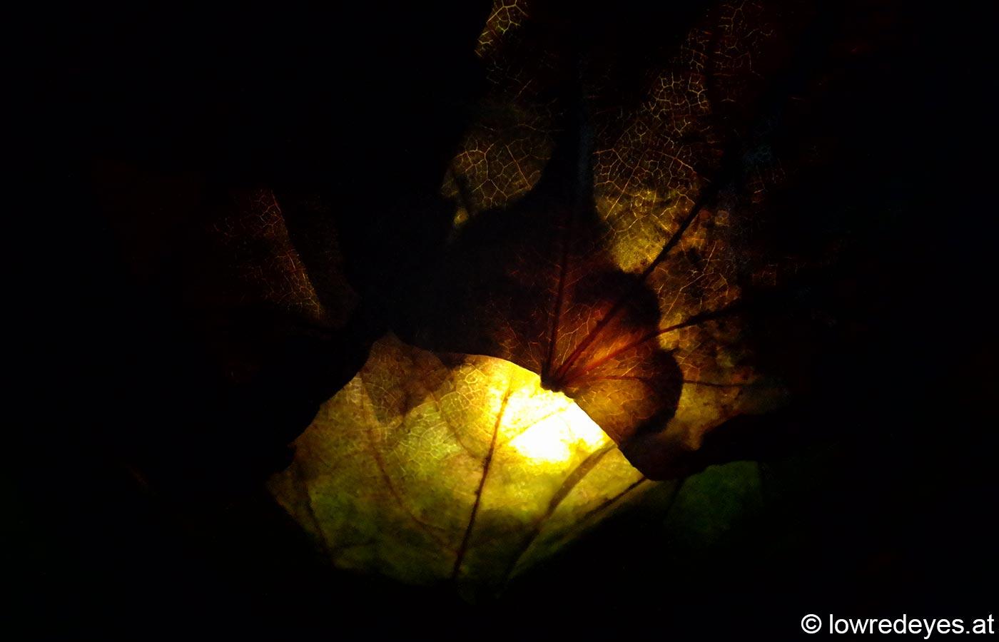 blaetterlampe2
