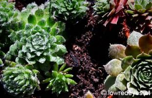 Terrarium für Sukkulenten