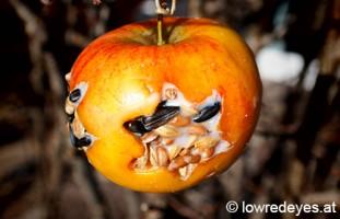 Vogelfutter - Apfel mit Herz