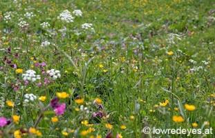 Essbare Pflanzen der Alpen - ÖAV
