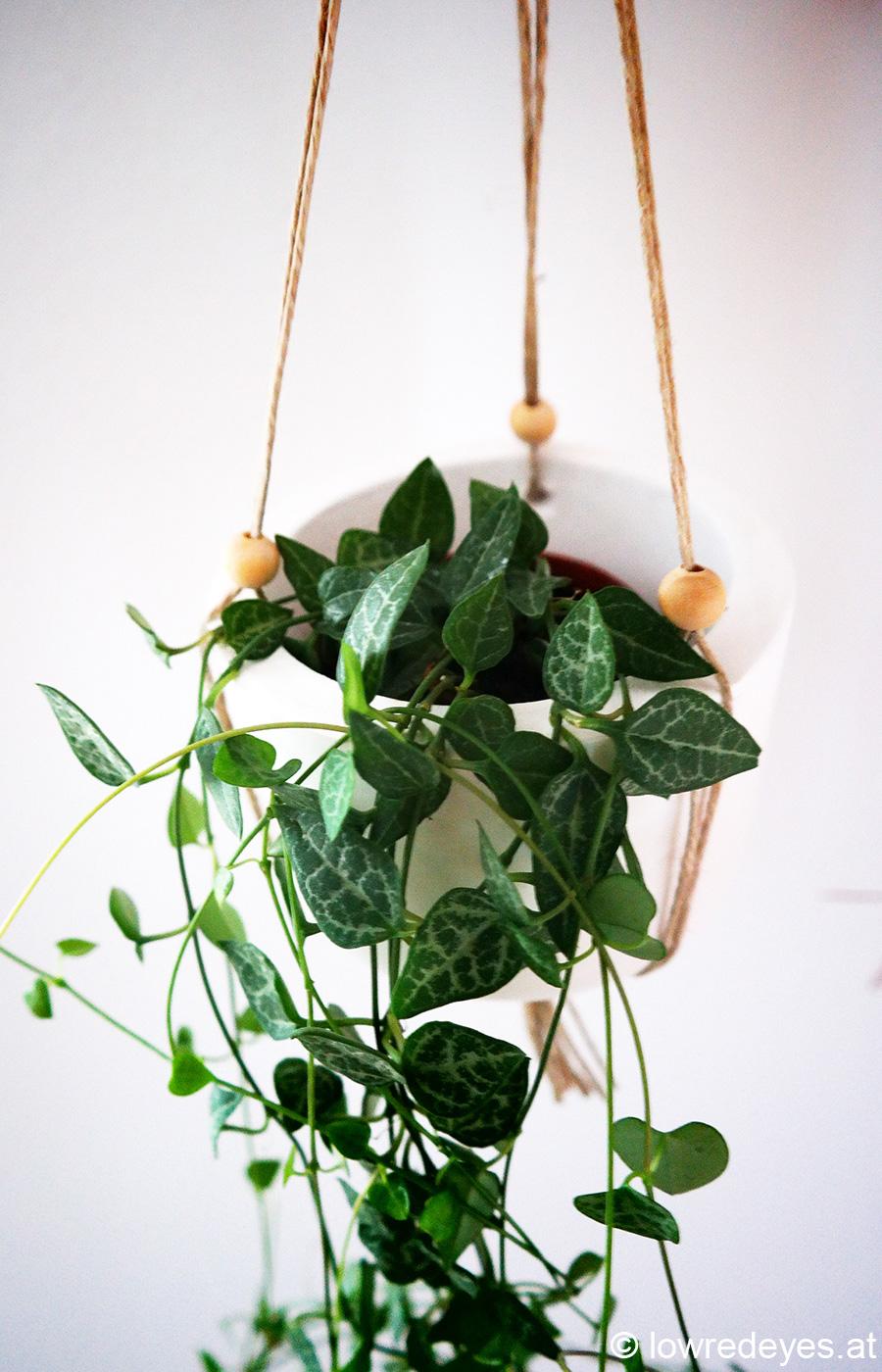 Blumenampel2