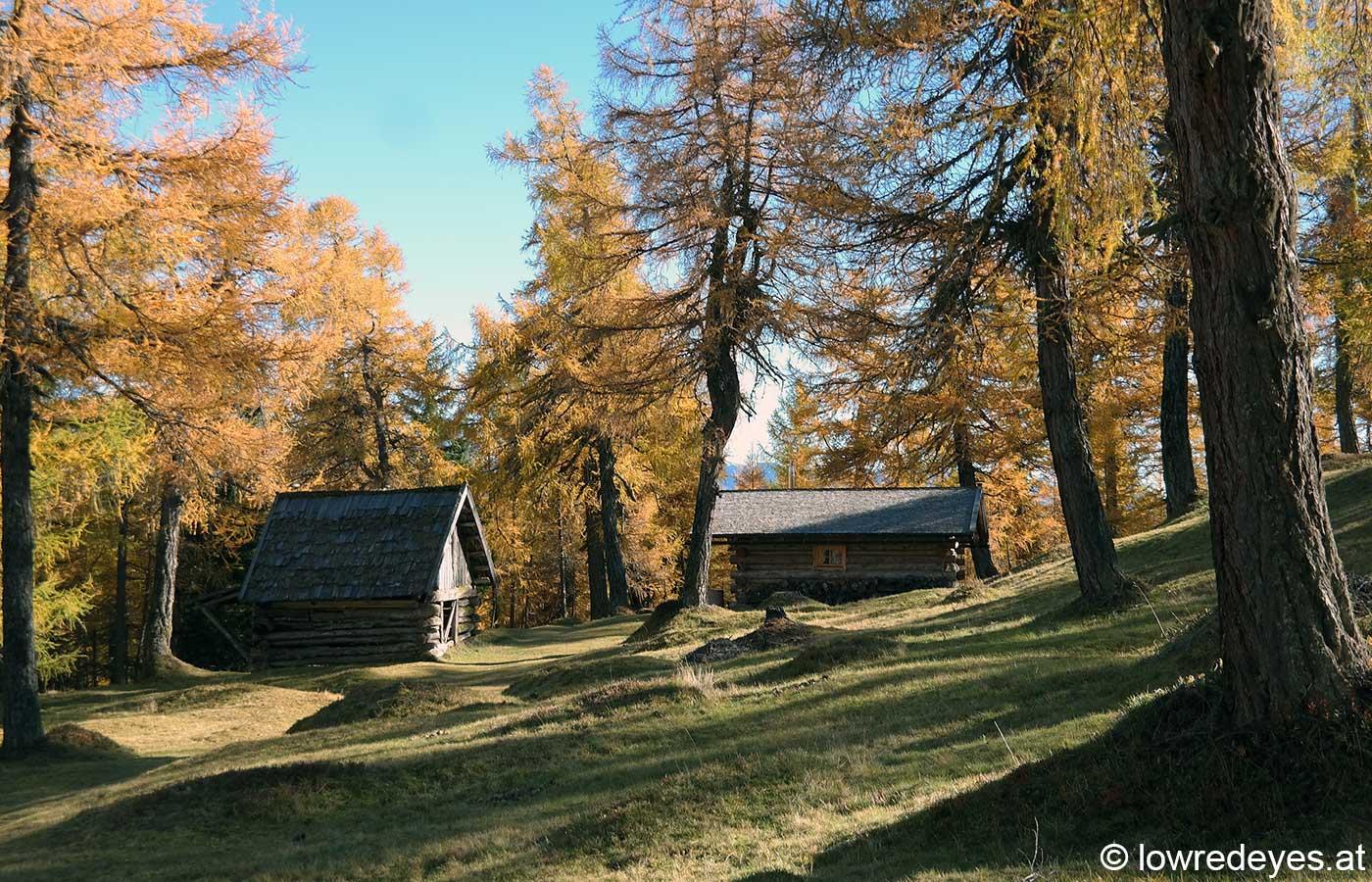 Naturspaziergang - Eulenwiesen - Lärche - Herbst