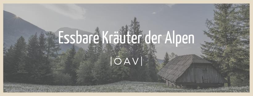 Essbare Kräuter der Alpen