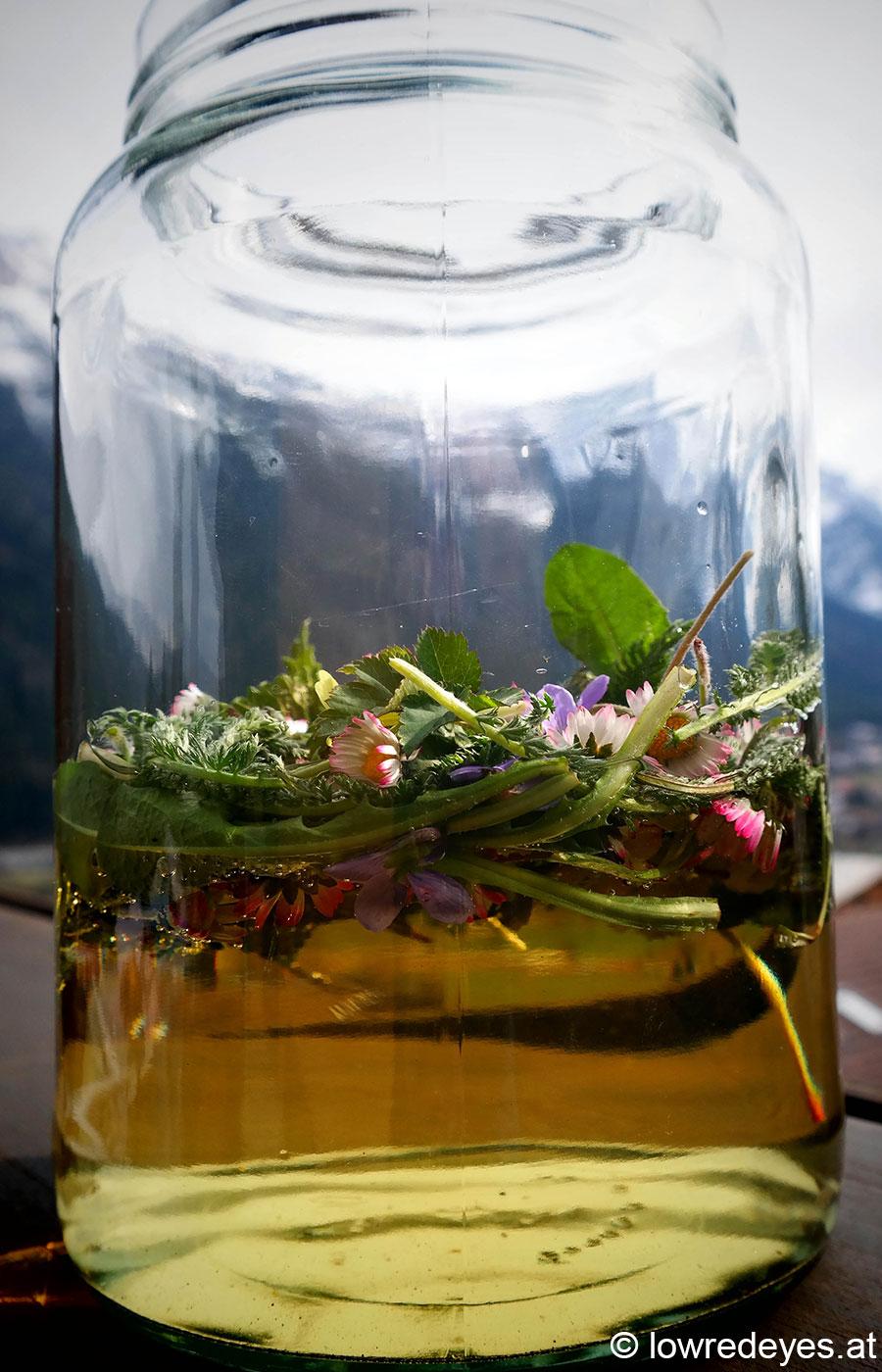 Rezept Wildkräuteressig mit Schafgarbe, Veilchen, Gänseblümchen, Löwenzahn, Giersch, Gundelrebe, Schlüsselblume