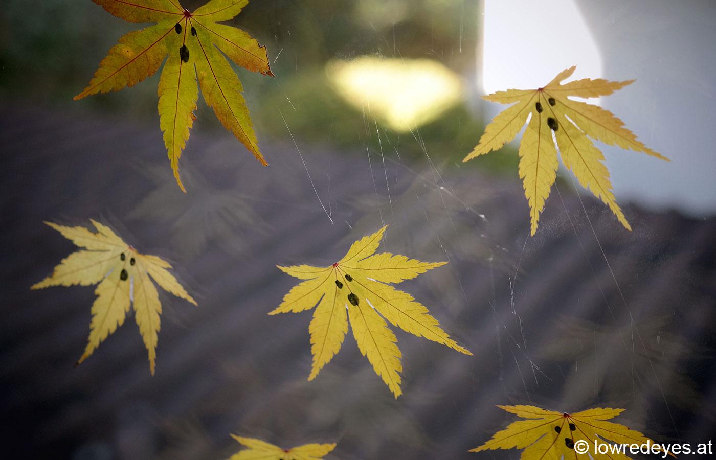 DIY Blättergeister gemeinsame Sache