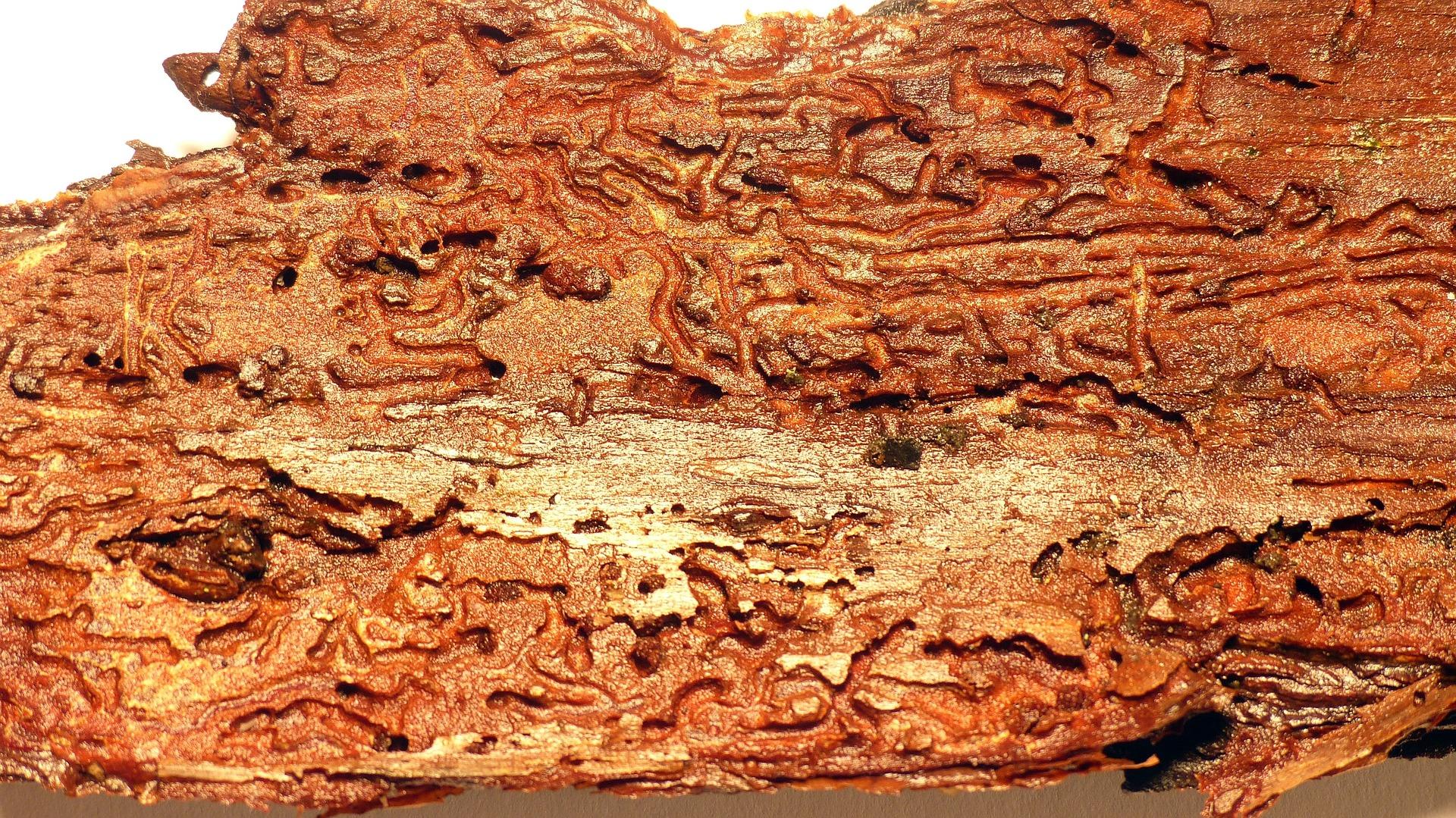 Spuren suchen und Fährten lesen - Holzwurm